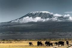 Elephants & Kilimanjaro (Jose Antonio Pascoalinho) Tags: africa kilimanjaro kenya wildlife mount environment elephants plains amboseli biophere zedith