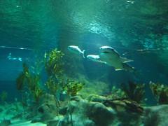 Here be sharks (rpsaf) Tags: newzealand 2009 downunder hawkesbay