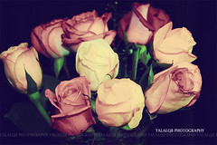 64-365 (Talal-Q8) Tags: flowers pool beautiful photography all  days rights planet 365 capture 2009 reserved     my     talalq8