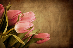 Tulip on Old Textured Paper (T. Aberle) Tags: life old pink plants art texture love nature beautiful beauty writing handwriting canon vintage paper words petals 500v20f tulips notes artistic letters faded february vignette 2009 handwritten timeless 30d papertexture oldpaper simplyflowers texturized mywinners abigfave anawesomeshot impressedbeauty memoriesbook overtheexcellence artgalleryandmuseums multimegashot ourmasterpieces theenchantedcarousel 100commentgroup artofimages thedantecircle artistictreasurechest imagesforthelittleprince weirenasfaves memoriesbook5