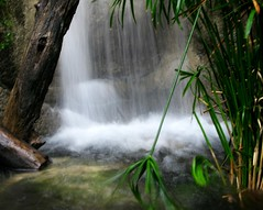 Tropical Waterfall (Don3rdSE) Tags: plant green nature water landscape zoo waterfall moving movement natural action iowa ia tropical desmoines blankparkzoo blueribbonwinner discoverycenter mywinners aplusphoto platinumheartaward theperfectphotographer don3rdse nsg8 niceshotmosaic13