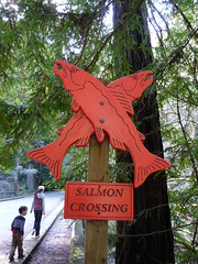 Salmon Crossing (Adrienne Johnson SF) Tags: kids declan samuelptaylorpark crossmarintrail