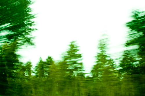 Driving Shot - Trees