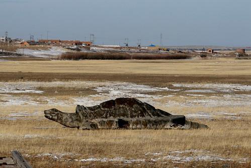 Lake Hulun Giant Turtle (by niklausberger)
