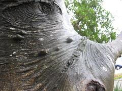 Black Rhino, Esprit Park tree (reuse) Tags: tree faces blackrhino espritpark
