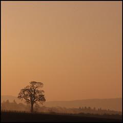 TheBruntryTree (angus clyne) Tags: morning mist tree dawn scotland oak perthshire strathmore oaktree flikcr