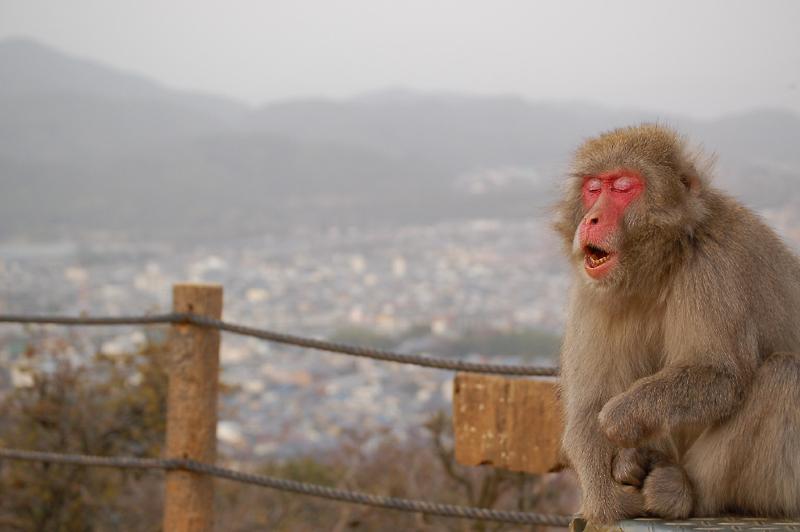 _monkey-20_