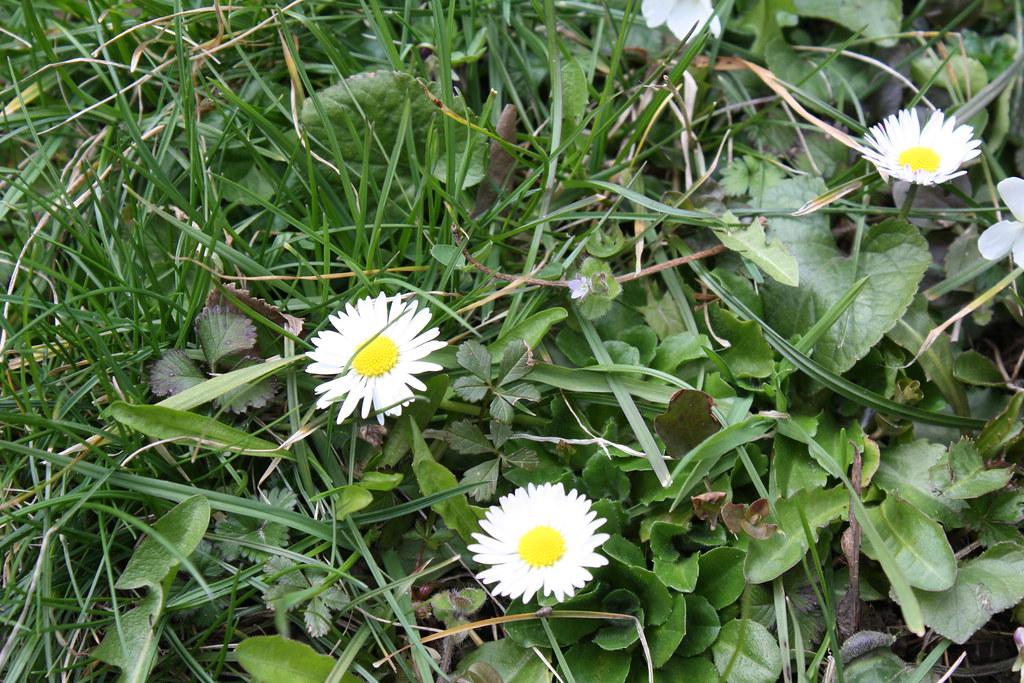 Endlich Frühling!!!