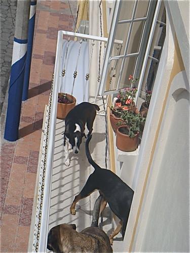 Ecuador-pets