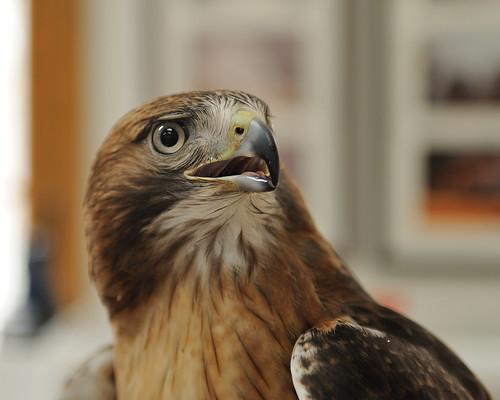 2009-03-28 Barnswallow - A Wild Bird Concern 4
