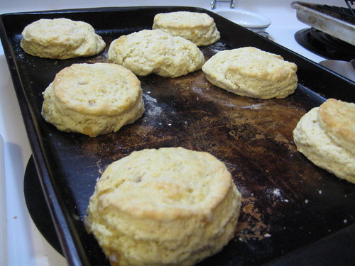 scones fresh out of the oven