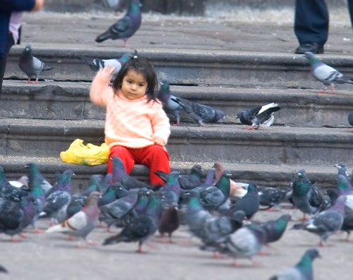 Playing with the Tilt - Peruvian Pigeons + Little Girl