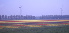 Nabij Lelystad (kath & theo) Tags: nederland enkhuizen vwbcn