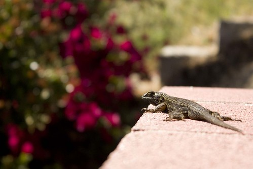 my lizard friend