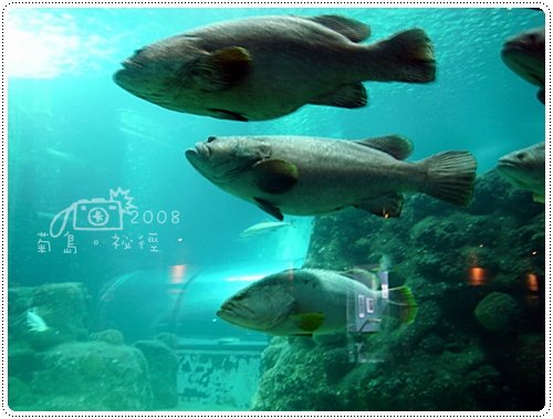 澎湖水族館 (3)