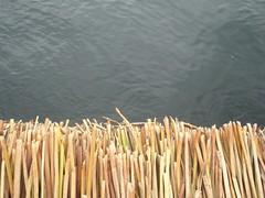 Al límite (Erika Revetria) Tags: uros titicaca totora lago agua isla juncos límite