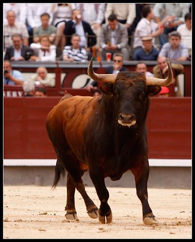 Toro Salvador Domecq