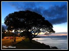 Beira-Mar Norte (Wilian Belmonte) Tags: sunset sol canon contraluz florianpolis prdosol arvore beiramar a720is