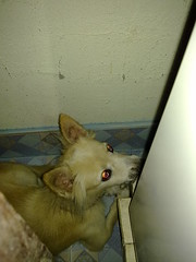 My dog, Judy scared from thunder sound