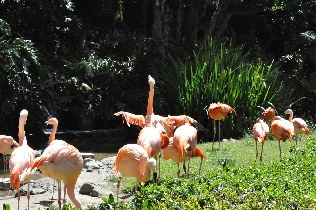 20090521_016 LA Zoo