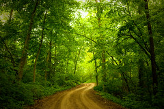 Path to Enlightenment (Mike Lanzetta) Tags: road trees light green up misty forest reading still you path here they why these because pathway