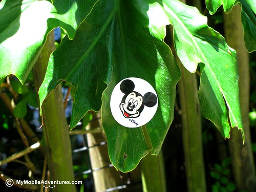 IMG_1367-Mickey-Sticker-On-Leaf
