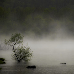 Haze (Lumase) Tags: trees mist lake tree nature rain fog square landscape haze poetry poem explore rainstorm piedmont soe sandburg drown 500x500 fineartphotos the4elements abigfave lumase luigimasella lagopiccolodiavigliana thedantecircle