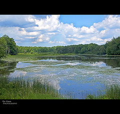 Wild Places Still Exist (Don Iannone) Tags: ohio summer lake clouds interestingness nikon flickr eagle bald bluesky explore summertime lilypads naturepreserve birdsanctuary baldeagles cuyahogariver naturesbeauty northeastohio wildplaces geaugacounty sceniclandscape landscapephoto headwaterspark doniannone summerbook july2009 doniannonephotography nikond2xcamera skyreflectionsinwater