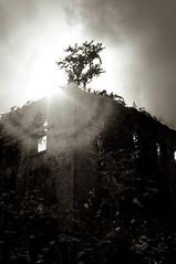 Roosevelt Island Smallpox Hospital (Jungletimer) Tags: blackandwhite abandoned ruins moody spooky rooseveltisland