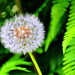 0014-01 - my garden summer