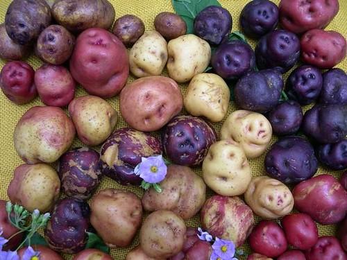 Oportunidades-De-Inversión-En-Agroindustria-la-papa-o-patata