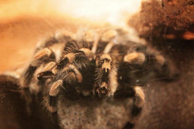 MODS spider