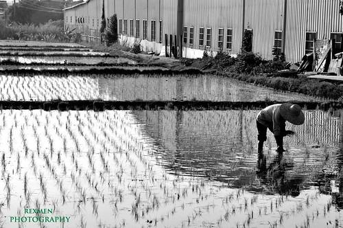 Farm and Farmer