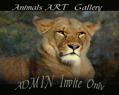 Animal Art Gallery