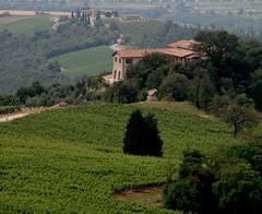 Vitalonga (glm.email) Tags: relax confine natura di terra uva umbria viti ficulle vitalonga maravalle elcione vitalonga1