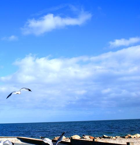 beach silhouette seagull 2