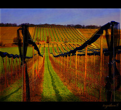 ~ another beautiful day in the wine area ~ (together8) Tags: nature landscape austria tistheseason wineregion mywinners nikond40 betterthangood proudshopper natureselegantshots vosplusbellesphotos oraclex goldenart novavitanewlife together8 sensationalphoto artistictreasurechest imagesforthelittleprince
