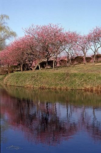 古河総合公園VELVIA100F
