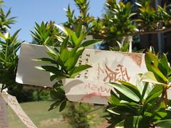 Wishing Tree in the Japanese Friendship Garden in Phoenix, Arizona