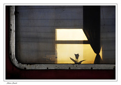 64 (Mahsa Jamali) Tags: light shadow window train mahsa jamali