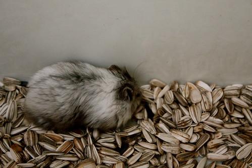 my hamster 5