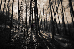 . (Ansel Olson) Tags: park trees shadow sunlight forest landscape evening virginia woods running run brush richmond trail va xc mountainbiking jamesriver tiltshift artlibre buttermilktrail irunhere