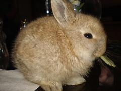 FELIZ SABADO (Gioser_Chivas) Tags: animal cafe conejo mascota conejito mamifero gioser