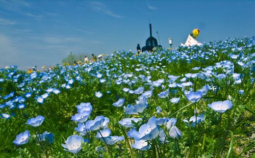 R0014864 : Blue Landscape