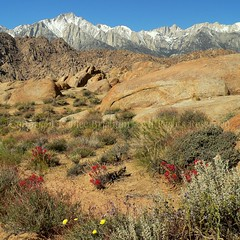 Spring in the Alabama Hills