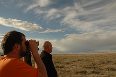 looking for the elusive snow geese (bingo_todd) Tags: montana snowgeese