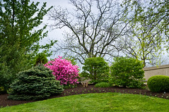 Spring Garden (Bruce Livingston) Tags: nj warrencounty newjerseyasbury bluearmyshrine