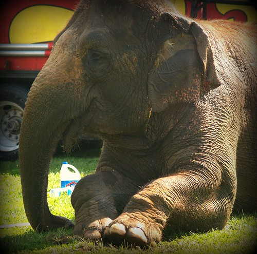 May an elephant caress you with his toes...