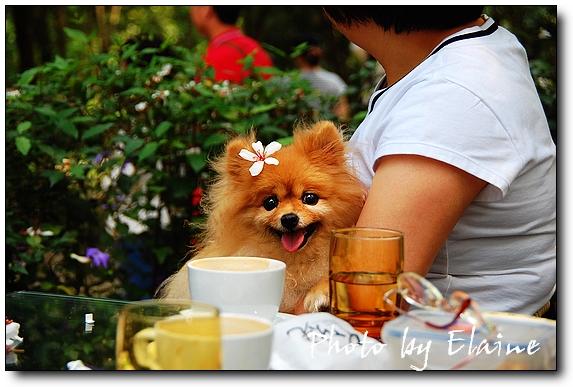 可愛的狗狗也來賞花