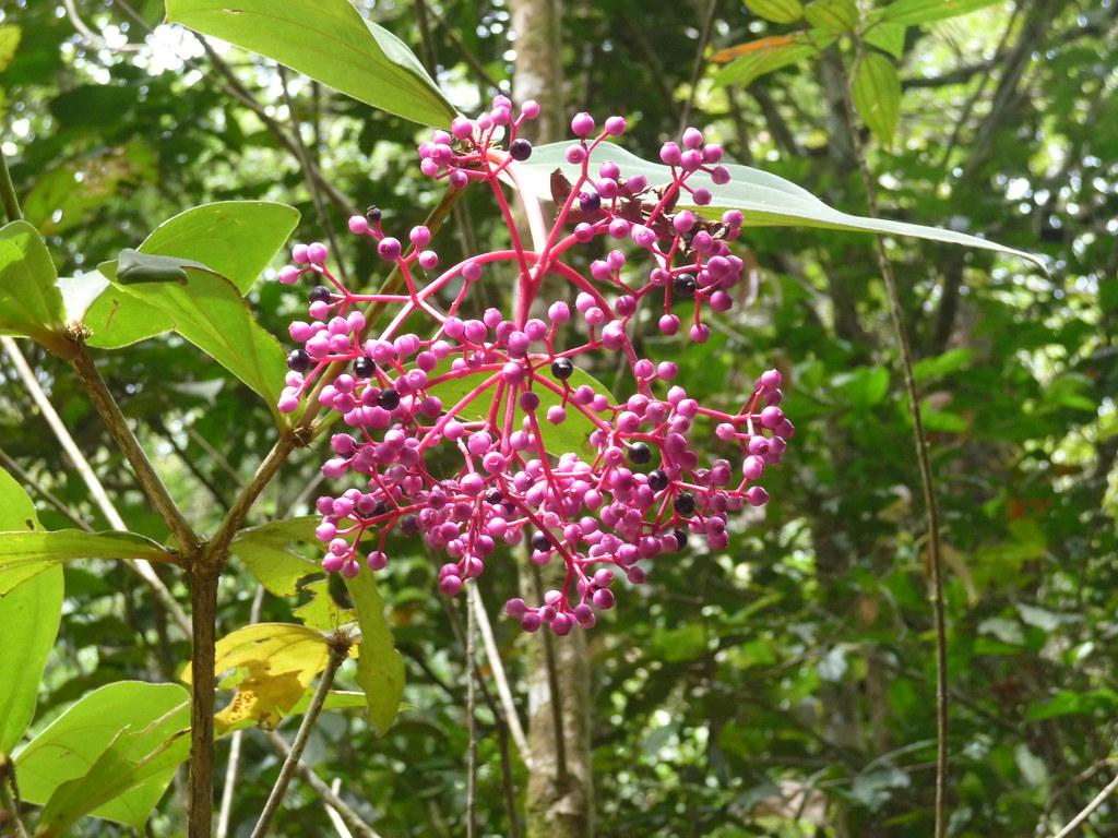 Kinabalu-PN (65)